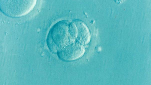 Embryo, Ivf, Icsi, Unfruchtbarkeit