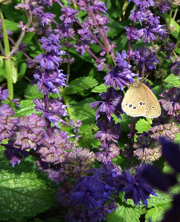 园林艺术, 春天, 紫, 关闭, 紫色的花, 蝴蝶