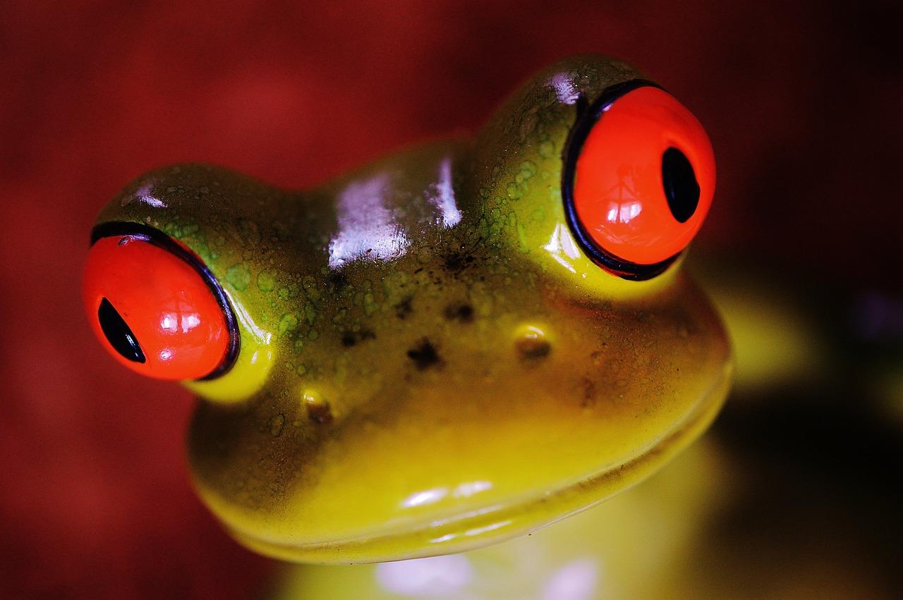 Сделать подарок, картинка прикол жаба