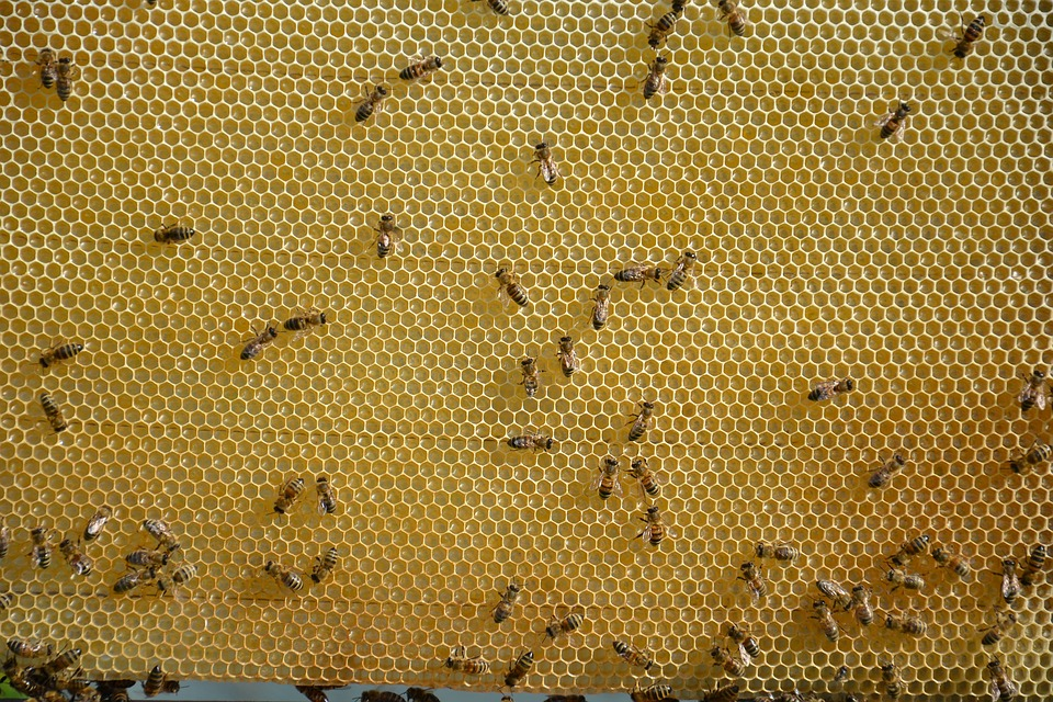 honeycomb-1516618_960_720.jpg
