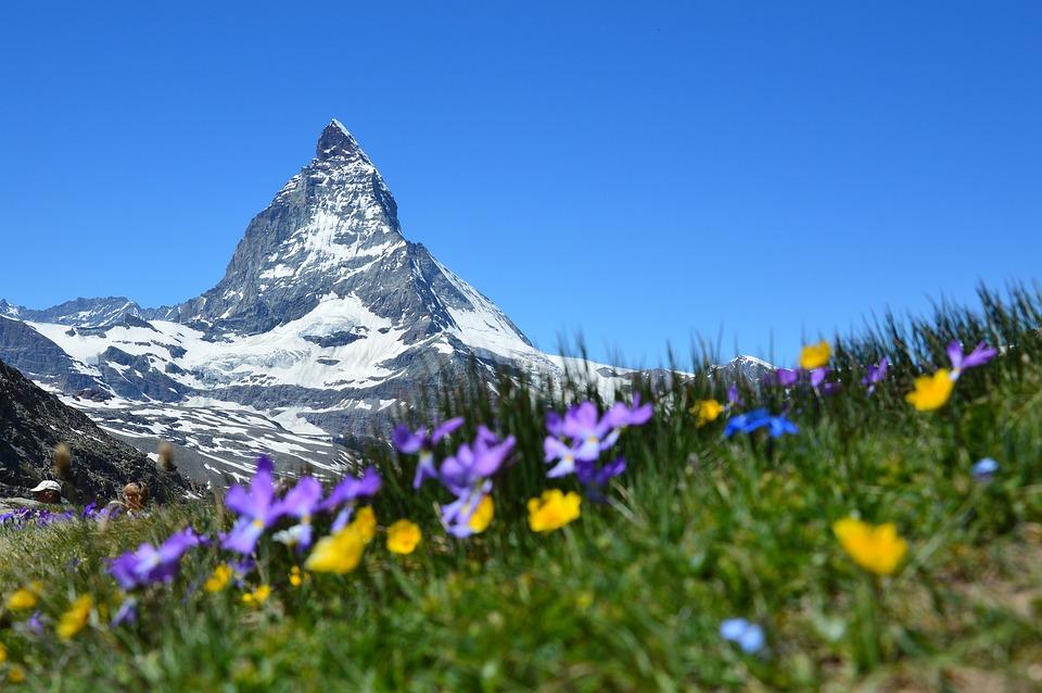 Berg, Blumen, Landschaft