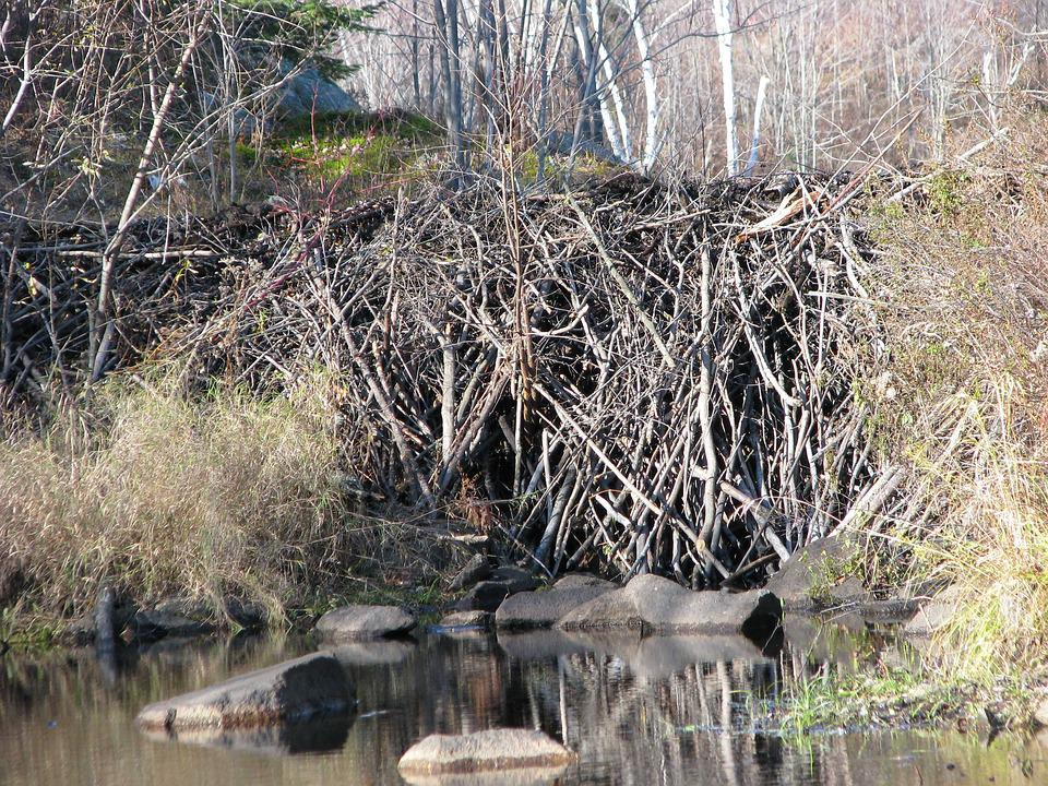Das Beaver Dam, Nahaufnahme, Hirsch Rock Lake, Ontario