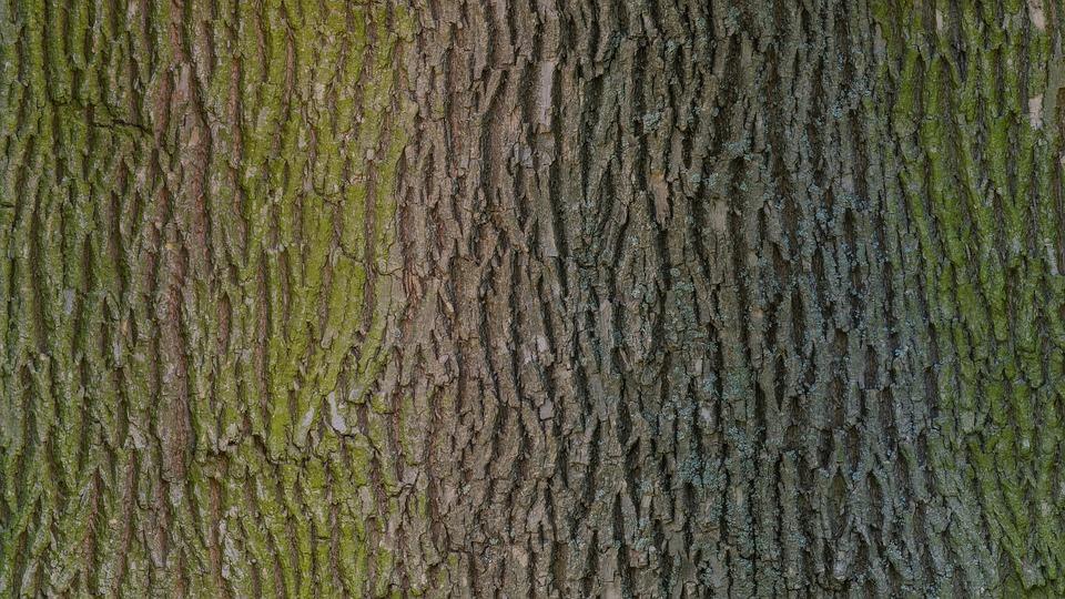 Tree Bark Wood - Free photo on Pixabay