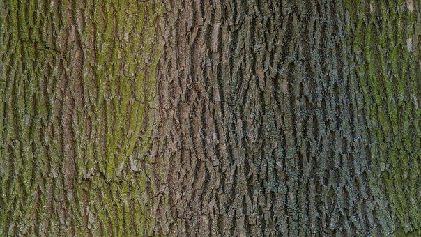 Tree Bark Wood Texture Photo Scan Photosca