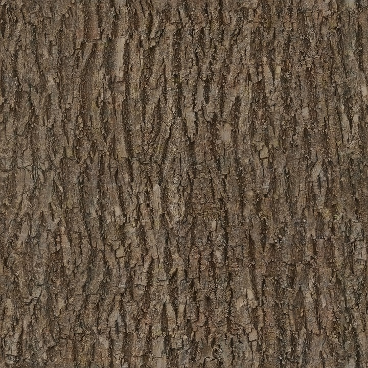 seamless tree bark texture wwwpixsharkcom images