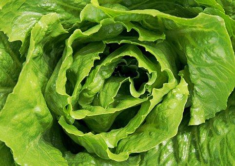 Lettuce, Salad, Leaves, Leaf, Green