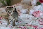 kitten, newborn, cat