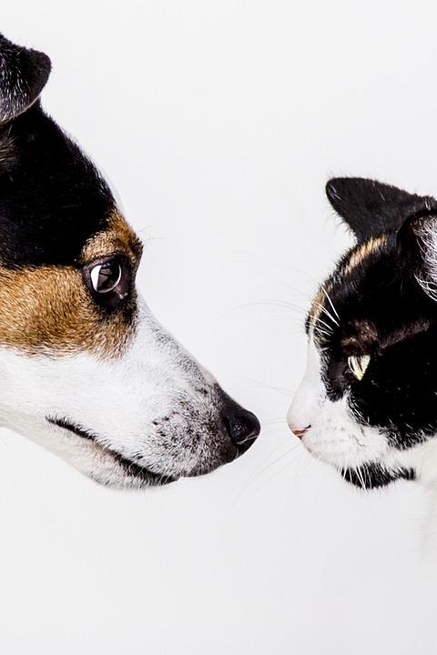 Gato, Cão, Animais, Animal De Estimação, Natureza