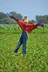 scarecrow, deterrent, field