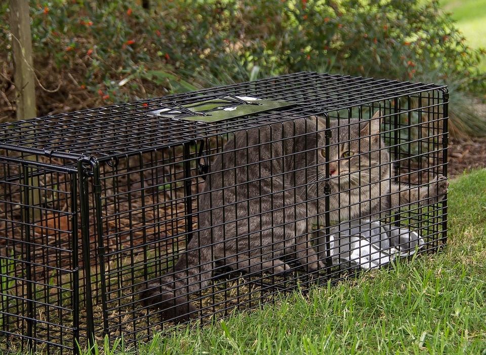 Trap Cat 183 Free Photo On Pixabay