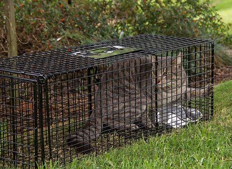 Trap Cat Cat Trap Feral Wild Control Pest