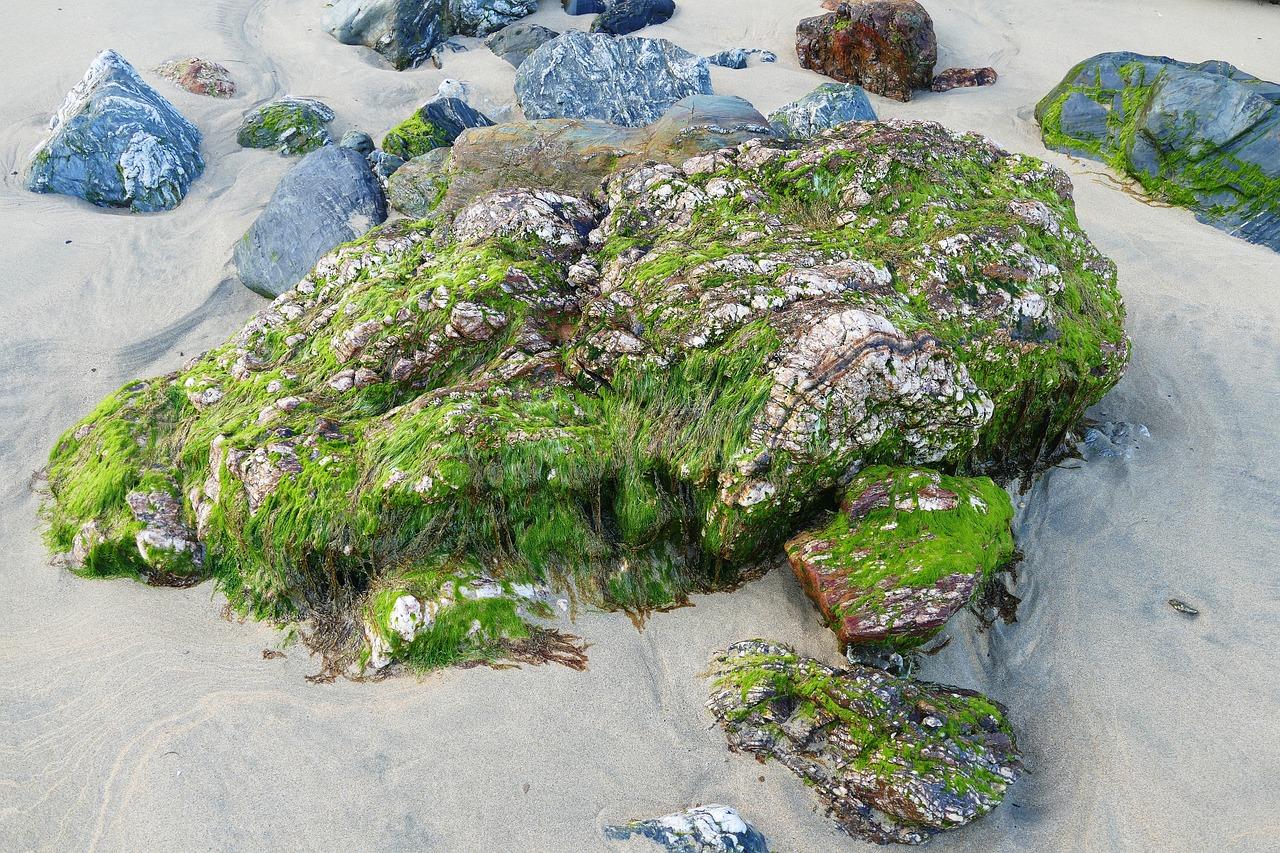 Картинки водорослей и камней