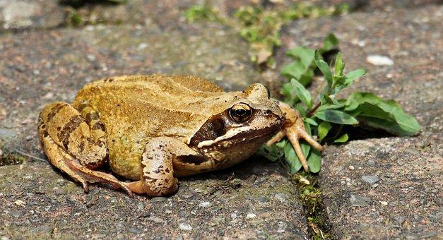 Frog, Animal World, Animal, Amphibians