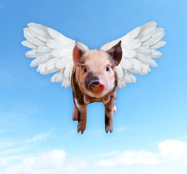 豚, フライ, おかしい, ブタ, 貯金箱, 翼, 豚肉, 蹄, フライト
