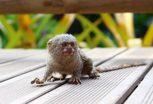 Small Monkeys, Mono, Nature, Animal