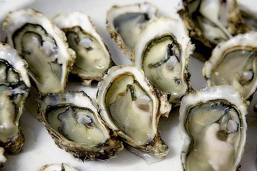 Oyster Shell Seafood Crustaceans Oyster Oy
