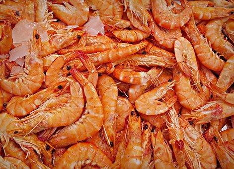 Shrimp Prawn Animal Seafood Decapod Crusta