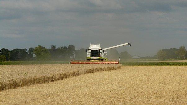 В Воронежской области намолот зерна превысил 4,3 млн тонн, убрано 90 процентов всех площадей
