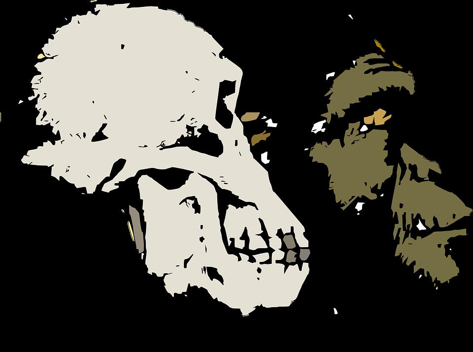 Evolution - Free images on Pixabay