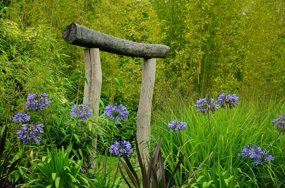 Agapanthes Jardin Porte Japonaise - Photo gratuite sur Pixabay