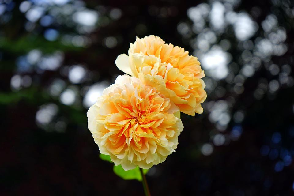 fiori gialli luglio