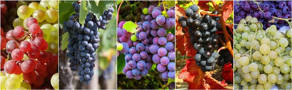 Anggur Buah Buahan Kolase Makanan Gambar Gratis Di Pixabay