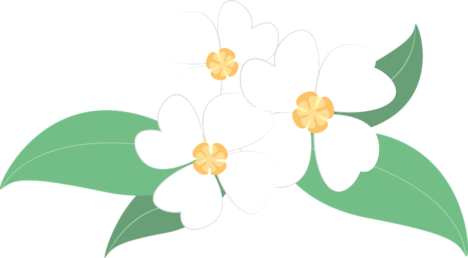 Flowers Plants White Free Vector Graphic On Pixabay
