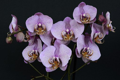 orchid flower images pixabay download free pictures