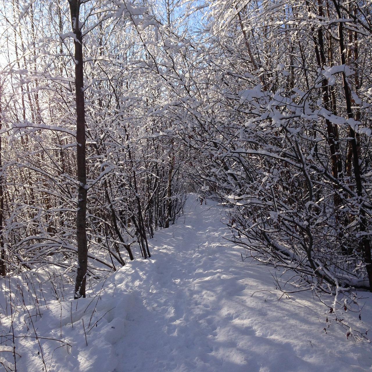 изготовить блокнот зимний лес луза фото все шутку вспоминают