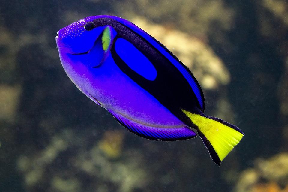 Well-known Peixes Peixe De Água Salgada Azul · Foto gratuita no Pixabay FF16