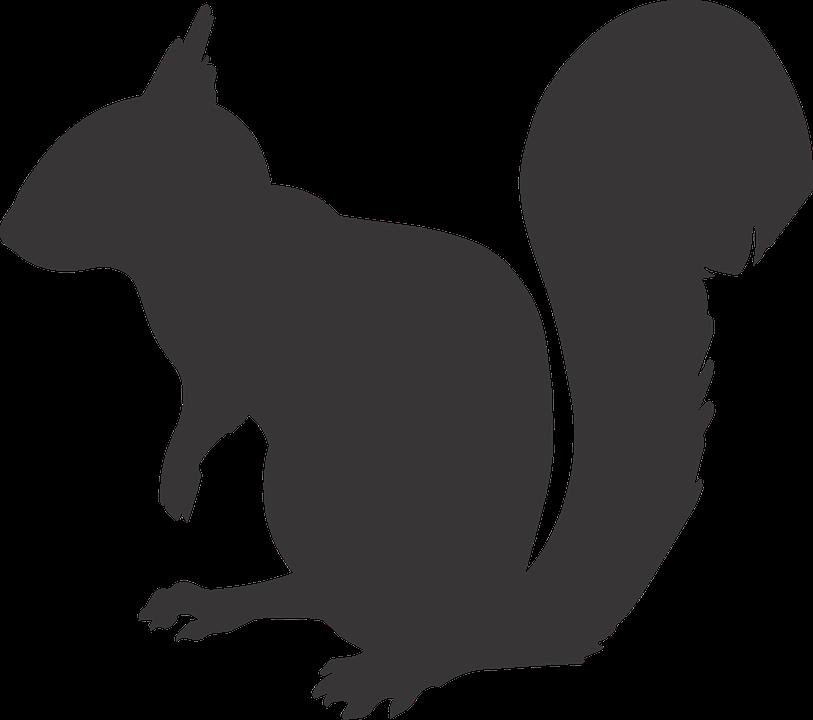 pdf Automorphic forms, Shimura