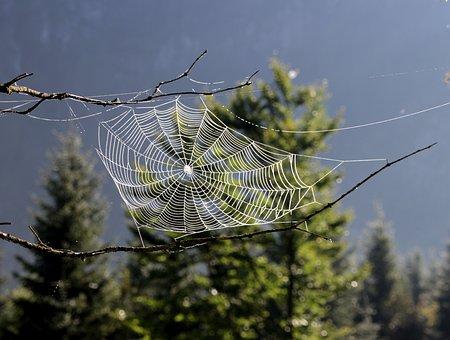 Перша павутинка