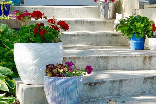 Stairs, Plants, Flowers, Flower Pots