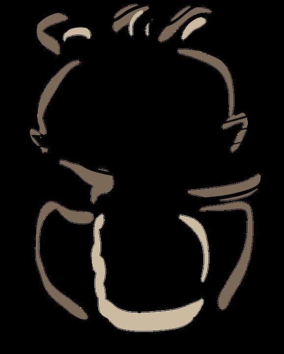 Hamster Rongeurs Dessin Images Vectorielles Gratuites Sur Pixabay