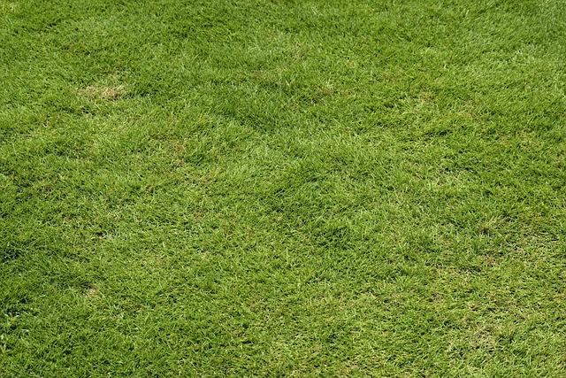 Photo gratuite vert herbe pelouse arri re plan image for Recherche tonte de pelouse