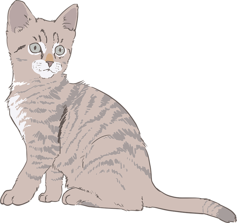 Kitten cat drawing line art line art fur kitty