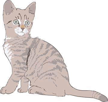 Kitty Vector Graphics Pixabay Download Free Images