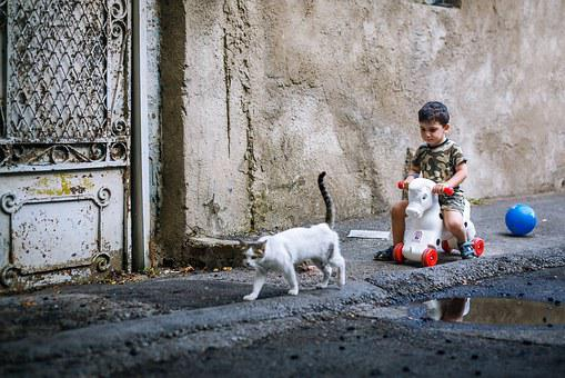 Humanities, Kitty, Play, Child, Street