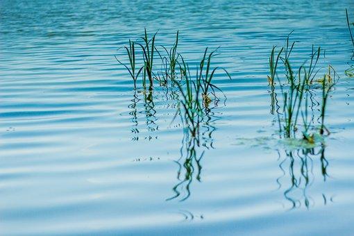 Cara Ternak Kutu Air Tanpa Bibit