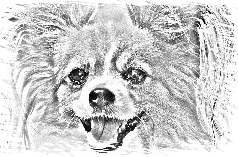 tekening hond chihuahua - gratis afbeelding op pixabay