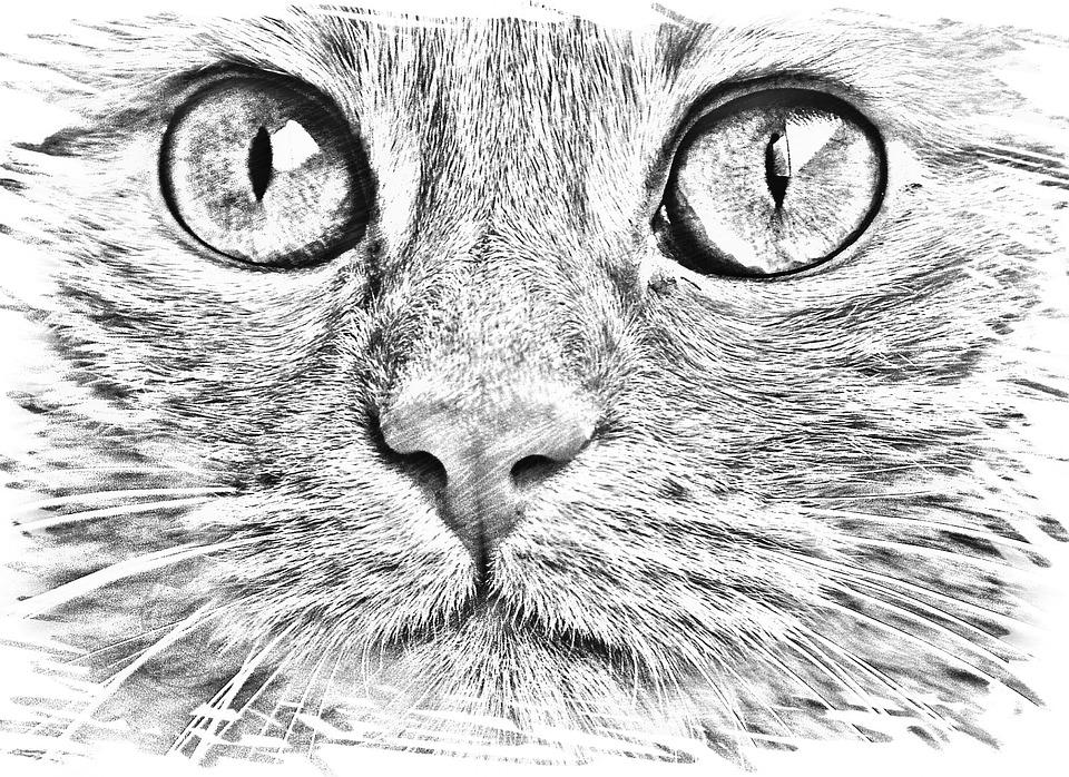 Dibujo Gato La Cara Imagen Gratis En Pixabay