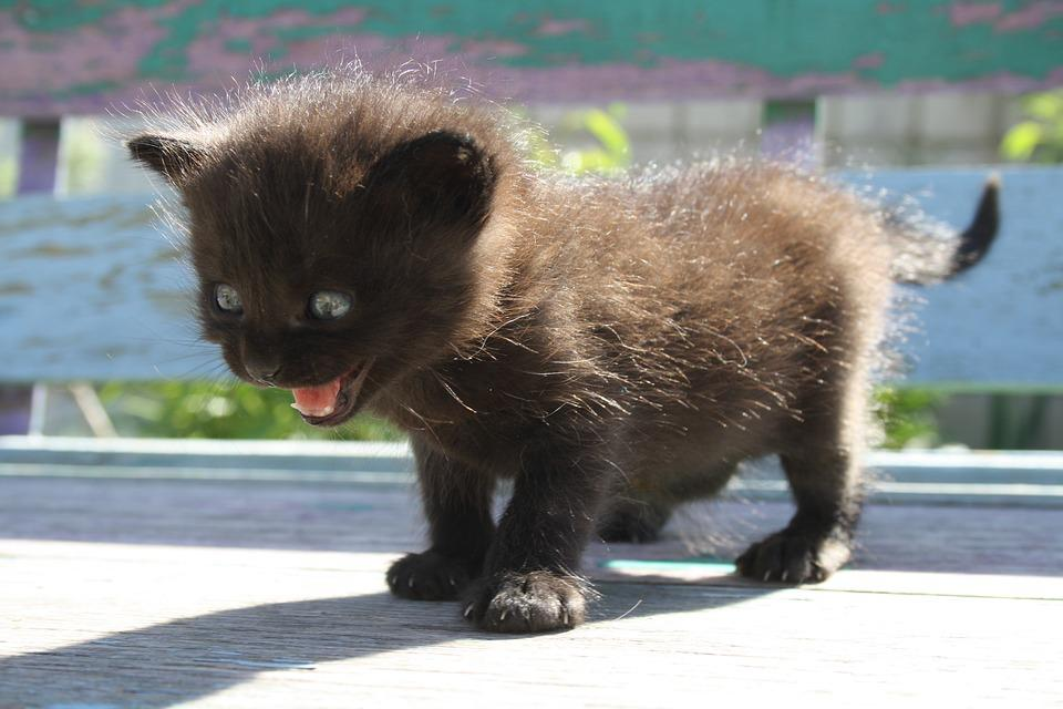 Angst, Schreck, Katze, Angstzustand