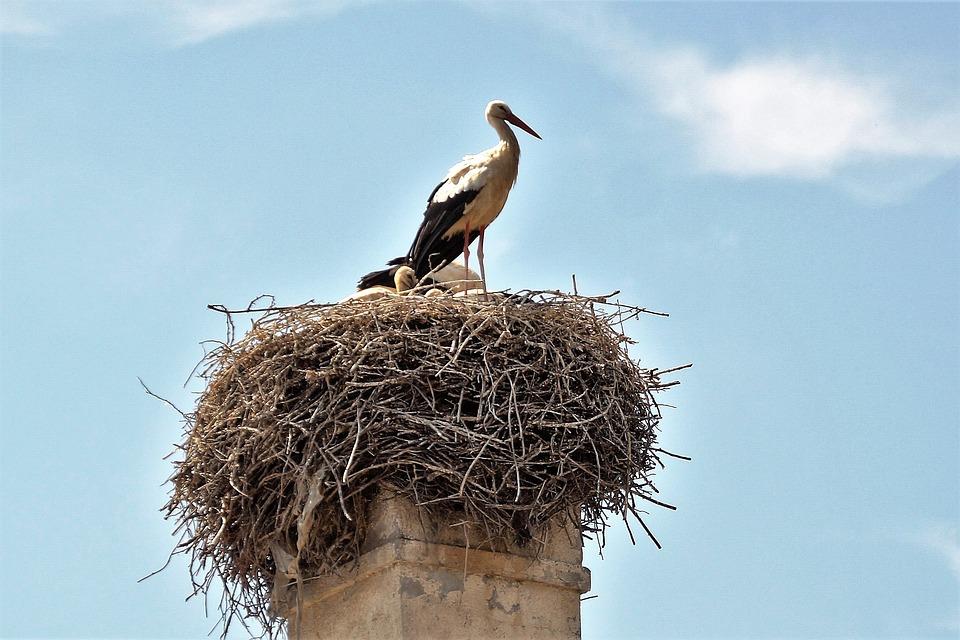 гнездо аиста картинки
