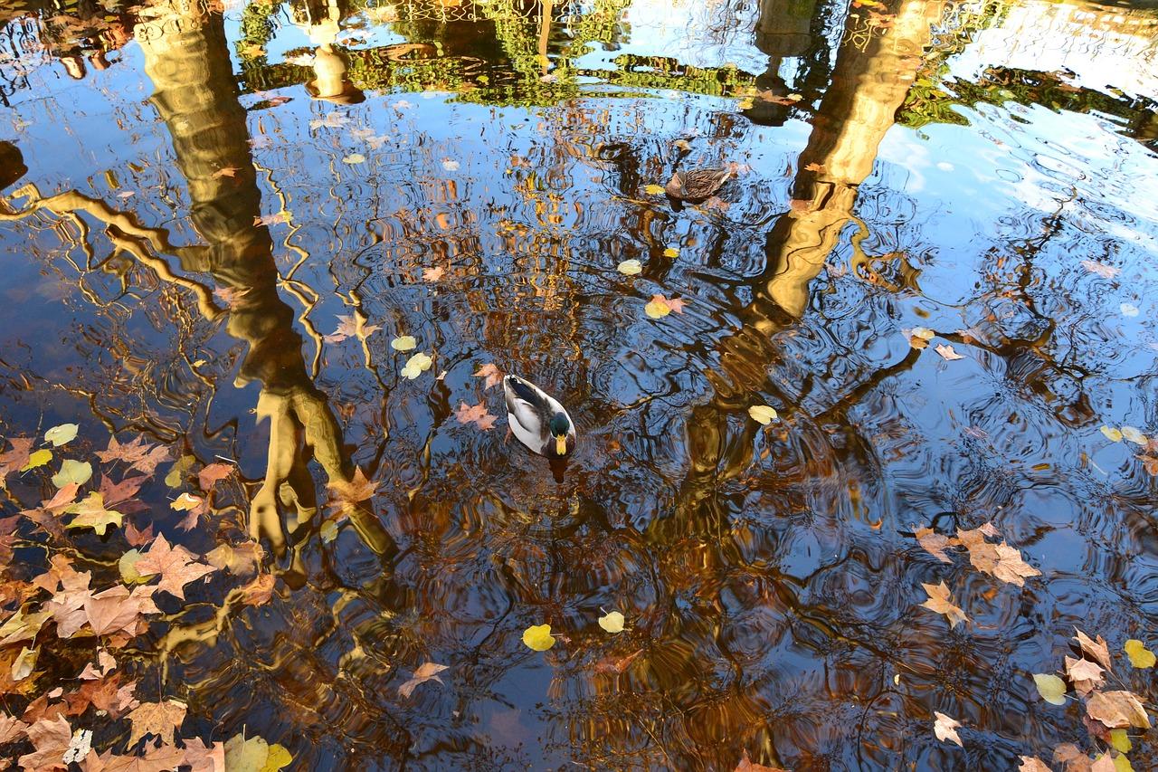 выращивания ежик отражение в воде стихи фото мебель