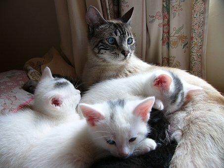 Cat, Kitten, White, Together, Family