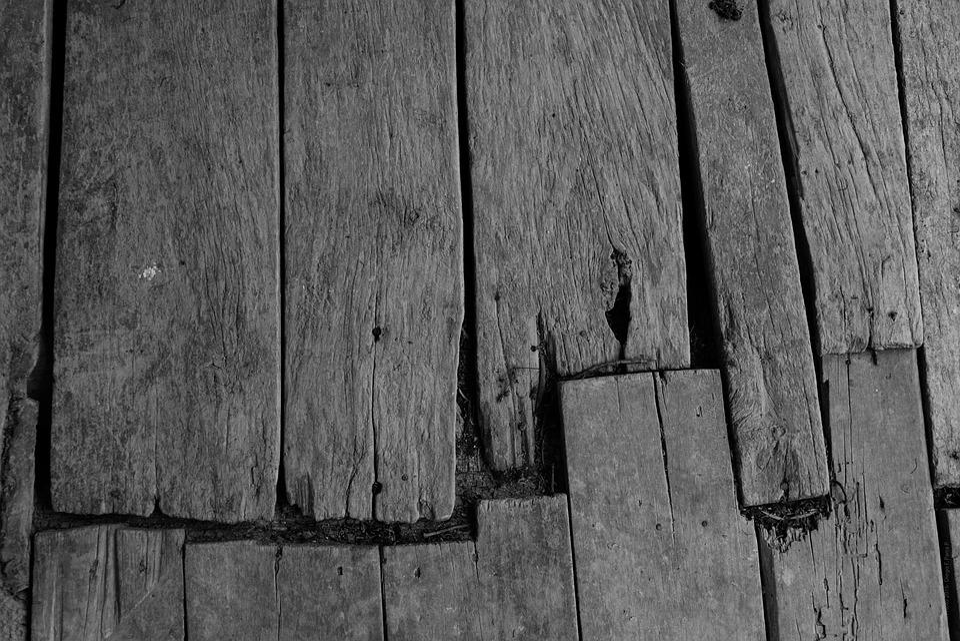 Legno Bianco E Nero : Foto in bianco e nero di albero con le radici u in legno piante
