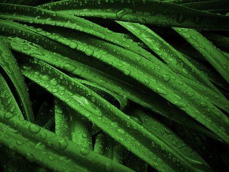 plant 1534333  340