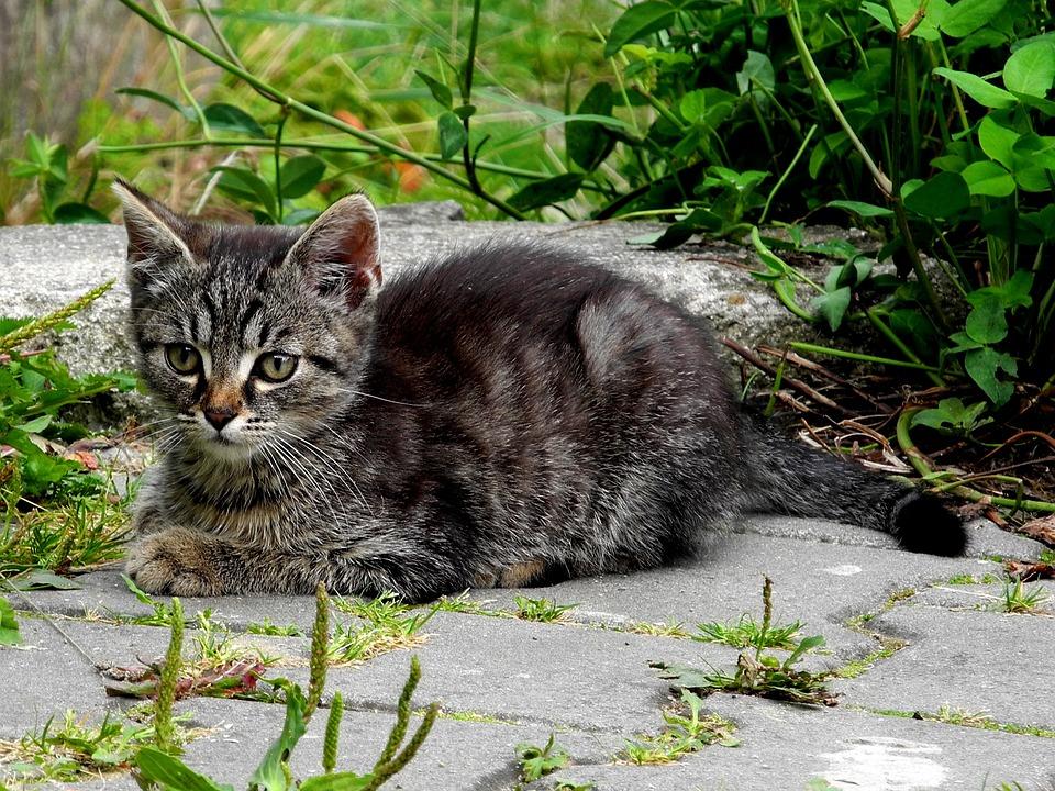 2620246cfe7d Γάτα Γατάκι Γάτος Μαύρο Και Άσπρο - Δωρεάν φωτογραφία στο Pixabay