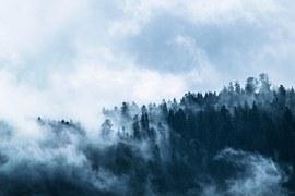 Fog, Forest, Dark, Gloomy