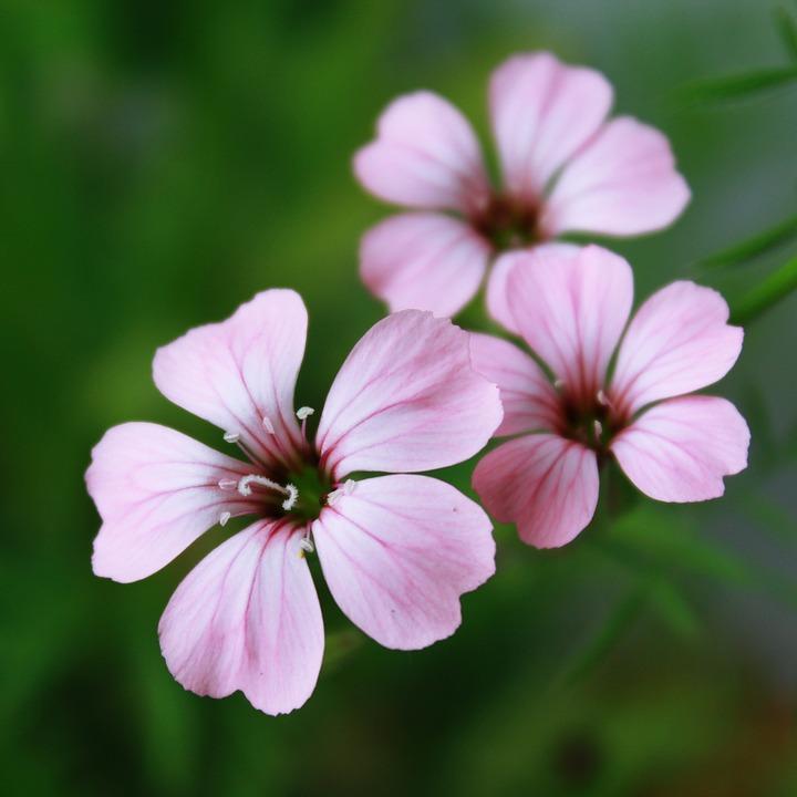 blomster i naturen